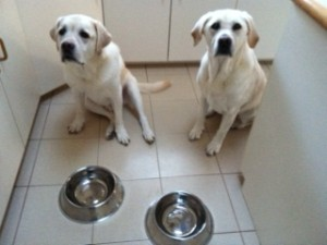 "My Dogs, Maia (R) and Zephyr (L), ""Patiently"" Waiting for Their Double Helix Water"