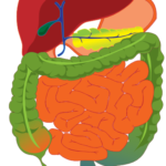 Comparing Digestive Enzymes
