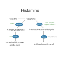 Biochemistry: Why DAO Can Help Histamine Intolerance