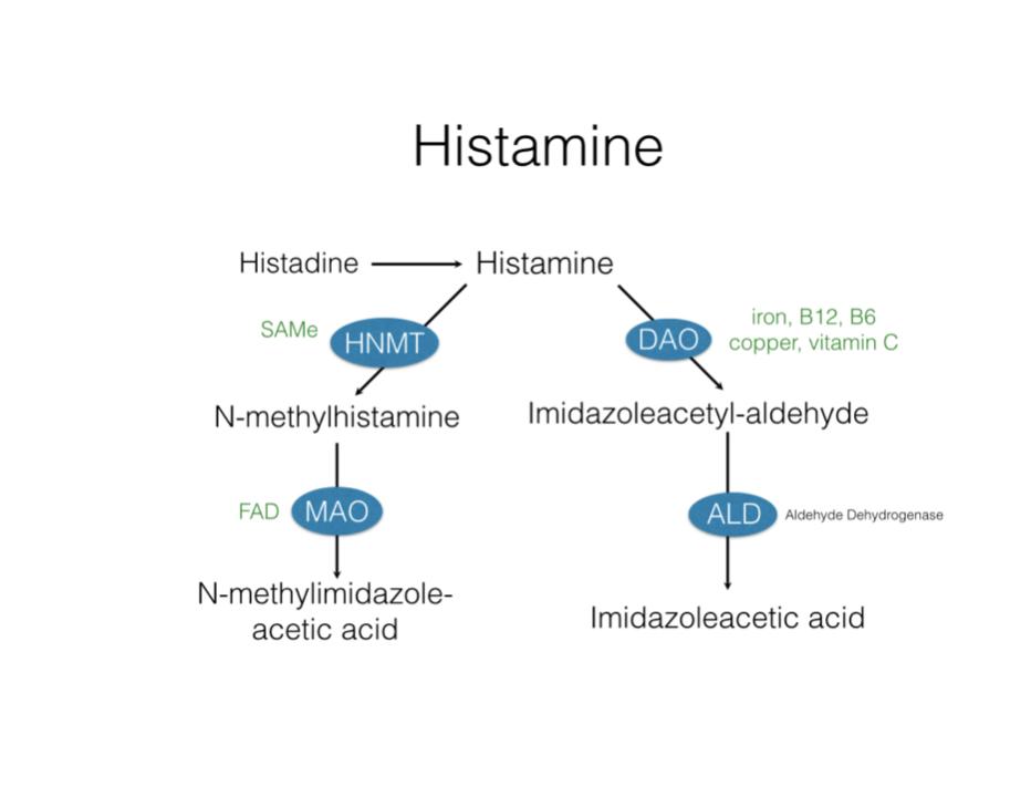 Histamine Biochemistry and DAO