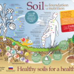 Soil: The Foundation of Nutrition