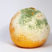 How to Combat Mold in Your Food
