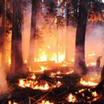 Wildfires, Nutrition and Respiratory Health